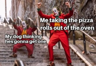 One of the best memes of the past week on Reddit - Me taking the pizza rolls out of the oven and my dog thinking he's going to get one.