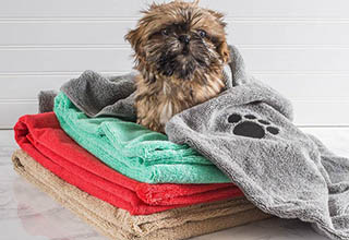 Spoil your favorite furry friend with these great finds!