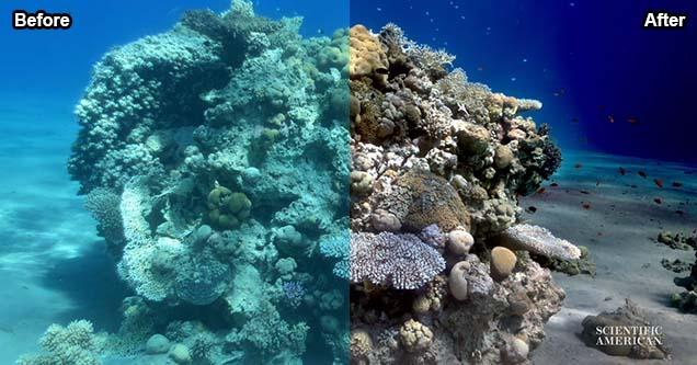 Underwater photograph with 'sea-thru' algorithm