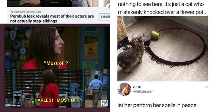 funny pics and memes to help make your day | step siblings meme - Thebeaverton.Com Pornhub leak reveals most of their actors are not actually stepsiblings | stupid funny - Diogenes of Lagos nothing to see here, it's just a cat who mistakenly knocked over