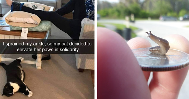 list of random pics    sprained my ankle and my cat - I sprained my ankle, so my cat decided to elevate her paws in solidarity   snail on a coin