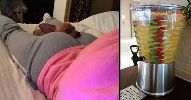 collection of funny and random pics for Wednesday  | a dog laying on his owners butt while she lays on her bed in grey sweats and a pink sweater | pic of a cool drink dispenser with layers of lemons and other fruits