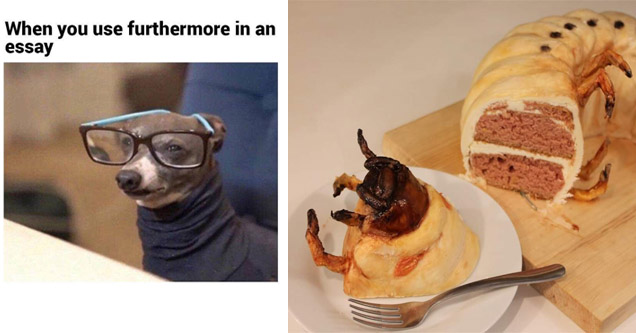 list of random funny memes | a dog with glasses and a turtleneck  hilarious funny meme - When you use furthermore in an essay | dessert