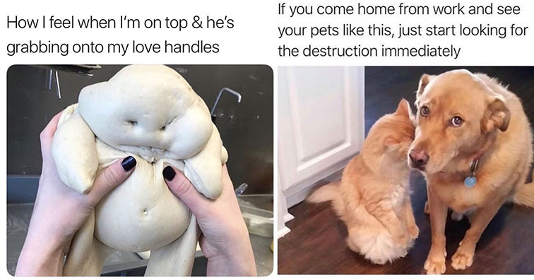 funny memes and pics to help you take a break and have a laugh | pillsbury doughboy meme - How I feel when I'm on top & he's grabbing onto my love handles | you come home and see your dog meme - If you come home from work and see your pets this, just star