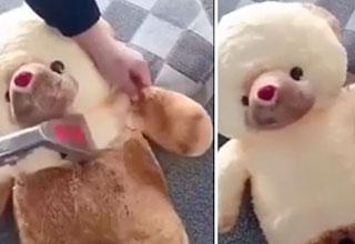 teddy bears goes through a deep clean and it looks so nice