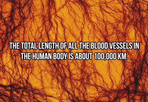 The human body is a pretty amazing thing.
