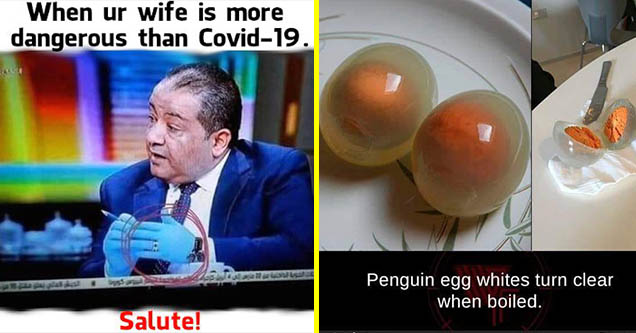 Funny memes   photo caption - When ur wife is more dangerous than Covid19. dala Salute!   hard boiled penguin egg - Penguin egg whites turn clear when boiled. weirdfacts.org