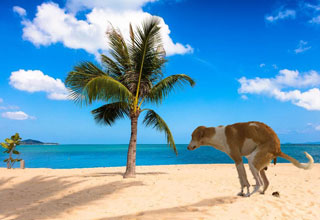 Cropped background of a dog pooping on a beach