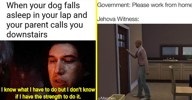 fun fresh pics and memes | photo caption - When your dog falls asleep in your lap and your parent calls you downstairs I know what I have to do but I don't know if I have the strength to do it. | presentation - Government Please work from home. Jehova Wit