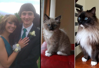 before and after photos of cat and couple at prom