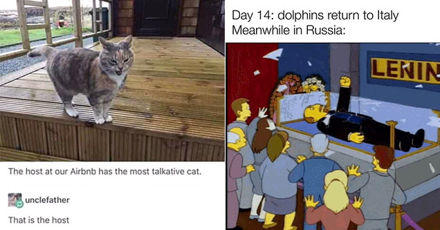 funny joke about a cat and lenin breaking out of tomb in the simpsons - Day 14 dolphins return to Italy Meanwhile in Russia Lenin