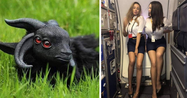 funny random pics |a black goat with two sets of eyes and two hot flight attendants