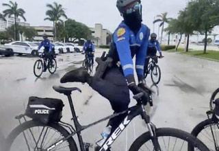 miami pd's bike squad