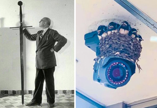 cool random pictures |tiny man holding large sword - birds nesting around security camera