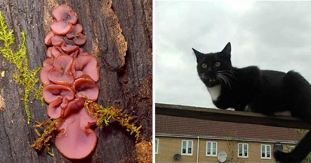 mushrooms that look like ham and a cat on a roof