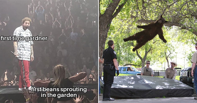 Post Malone getting flashed meme - garden memes. - bear falling from tree