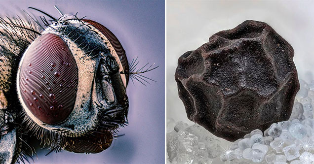 25 Amazing Things Seen Up Close