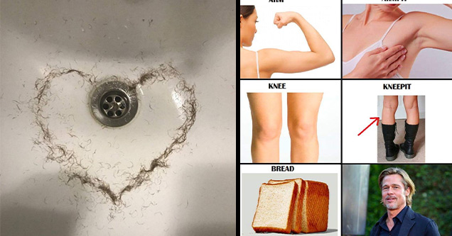 funny pictures | hair shaped into a heart in a sink | bread pitt - Arm Armpit Knee Kneepit Bread