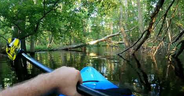 a kayaker in the NC swamp