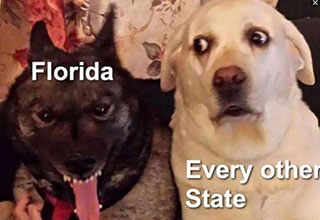 Florida Coronavirus memes are on the rise as the state becomes the new global hotspot of COVID-19.