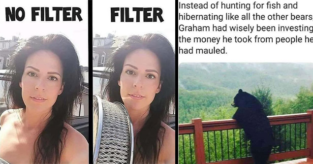 funny pictures | filter memes funny - No Filter Filter | bear chilling - Instead of hunting for fish and hibernating all the other bears, Graham had wisely been investing the money he took from people he had mauled.