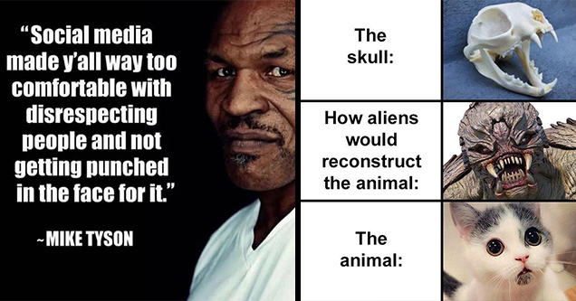 random memes | mike tyson cat skull mike tyson social media quote -