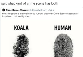 what kind of crime scene has both - koala and human finger prints are similar