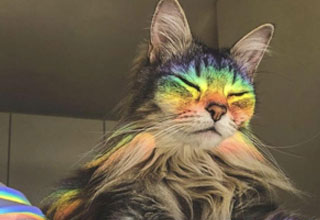 a cat sitting in a rainbow reflection