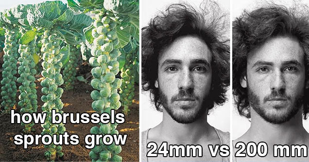 fascinating and cool pics | how Brussels sprouts 24 mm vs 200 mm camera perspectives