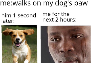 dank memes about walks on dog's paw me for next 2 hours: