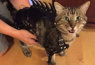 a cat in spikey black armor,