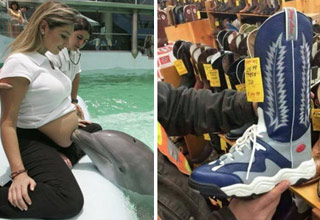 a dolphin smelling a pregnant womans belly and a shoe boot