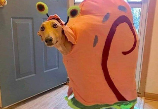 cool dog gary costume