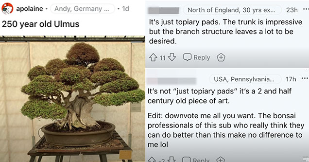 two guys on reddit argue about a 250-year-old bonsai tree