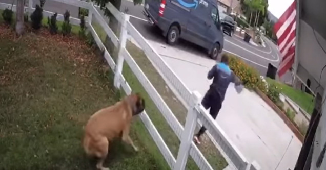 huge dog by fence and amazon delivery driver running away