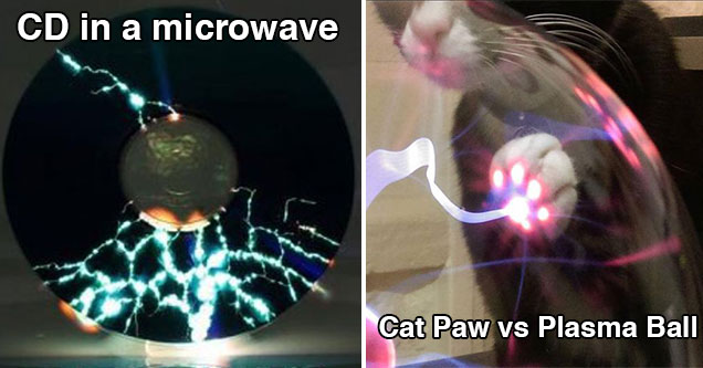 cd in the microwave and a cat paw touching a plasma ball