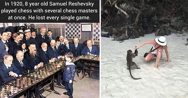 funny memes and pics -  in 1980, a 8 year old Samuel Reshevsky played chess with several chess masters at once. He lost every game - woman fighting a monkey who is stealing her bottle of wine