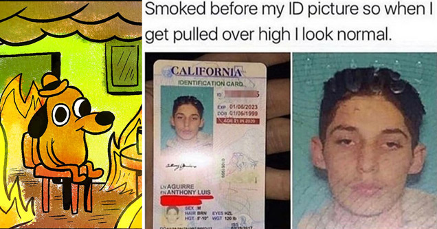 dog everything is fine fire house meme - smoked before my ID picture so when I get pulled over high I look normal