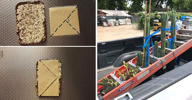 smart people figuring out to work easier not harder - perfect cheese to toast cut and tall plants being transported in a truck bed with a ladder
