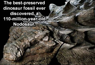 zuul crurivastator - 'The best preserved dinosaur fossil ever discovered- a 110 million year old Nodosaur.'