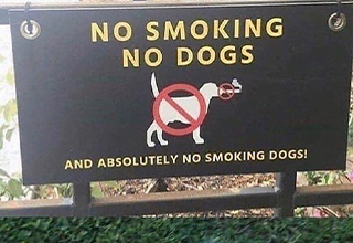 no smoking dogs