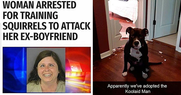 funny pics with chaotic energy -  woman arrested for training squirrels to attack her ex-boyfriend -  Did we adopt the kool-aid man?