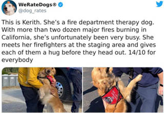 dog - WeRateDogs This is Kerith. She's a fire department therapy dog. With more than two dozen major fires burning in California, she's unfortunately been very busy. She meets her firefighters at the staging area and gives each of them a hug before they h