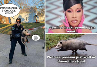 """Opossums (and possums) are a source of inspiration for an entire community of artists and <a href=""""https://www.ebaumsworld.com/pictures/22-awesome-memes-to-occupy-your-time/84809055/""""><strong>meme</strong></a> creators. There are few creatures that fill the small furry hole in our hearts like the opossum does. So send some to your friends and show some to your pets, because opossum <a href=""""https://www.ebaumsworld.com/pictures/50-fun-fascinating-photos-for-your-eyes-only/86483620/""""><strong>memes</strong></a> are too cute to keep to yourself."""