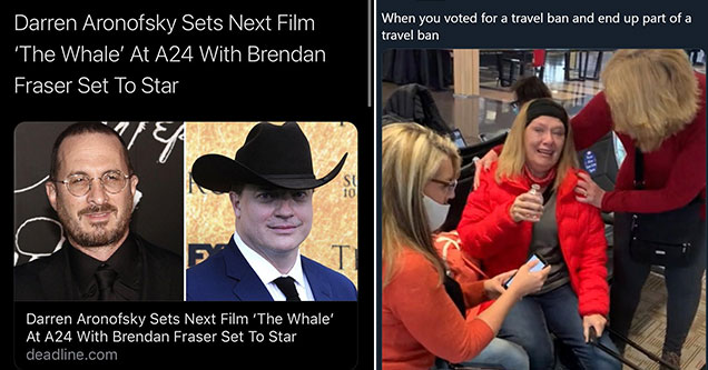 cool pics and memes -  the whale starring brendan fraizer -  when you vote for a travel bans and end up on the travel ban