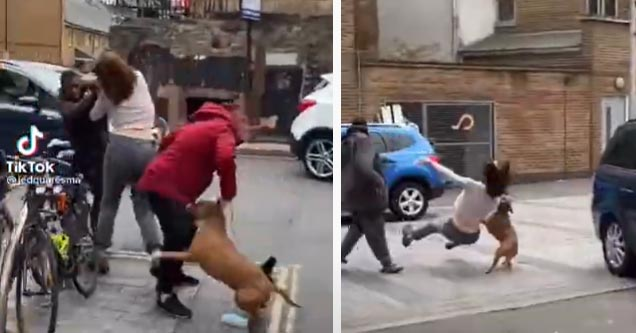 a woman being attacked and her dog tackling her