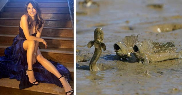 elizabeth hurley in a purple dress and mudkip fish making funny faces