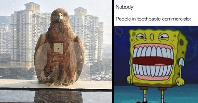 falcon iphone | spongebob memes funny spongebob faces - Nobody People in toothpaste commercials M