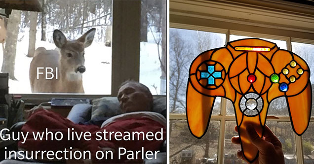 funny randoms -  the fbi -  guy who live streamed insurrection on Parler -  deer watching man sleep - a stained glass xbox controller
