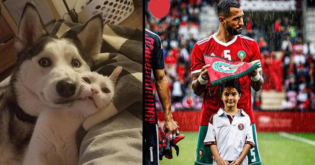 cute cat dog cuddle soccer player rain girl